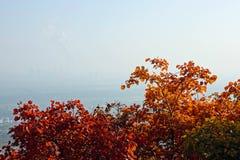 Luftförorening i hösten arkivbilder