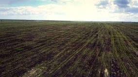 Luftfelder mit jungen Grünpflanzen dehnen zum Horizont aus stock video