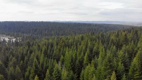 Luftfliegen ?ber einem Wald von gr?nen B?umen Hintergrund der gr?nen B?ume Brummengesamtl?nge stock video footage