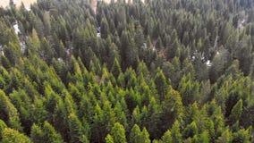 Luftfliegen ?ber einem Wald von gr?nen B?umen Hintergrund der gr?nen B?ume Brummengesamtl?nge stock footage