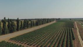 Luftflug über schöner Weinberglandschaft Yelow-Auto, das nahe dem Traubenfeld läuft stock footage