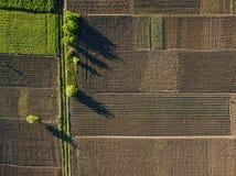 Luftfoto der Landwirtschafts-, Sommeransicht des grünen Landes mit Feldern und der Gärten Stockbild