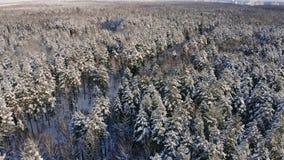 Luftfoto eines Winterwaldfliegens über den schneebedeckten Wäldern der Sonnensätze orange über den weißen Bäumen eisig stock footage