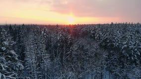 Luftfoto eines Winterwaldfliegens über den schneebedeckten Wäldern der Sonnensätze orange über den weißen Bäumen eisig stock video