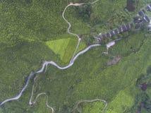 Luftfoto - Vogelperspektive der Teeplantage am nebelhaften Morgen Lizenzfreie Stockfotos