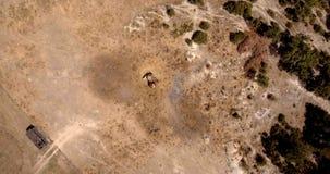 Luftfoto von den Pferden, die Heu am sonnigen Sommertag, Draufsicht essen Stockbild