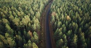 Luftgesamtlänge über grüne Kiefern-und gelbe Birken-Wald mit der Straße mitten in ihr, Kamera folgt der Straße stock footage