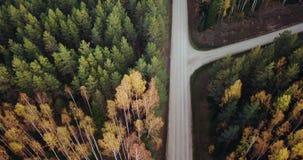 Luftgesamtlänge über grüne Kiefern-und gelbe Birken-Wald mit der Straße mitten in ihr, Kamera folgt der Straße stock video