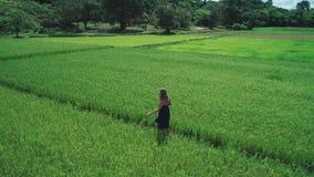 Luftgesamtlänge des brummens 4K des blonden Mädchens im blauen Kleid gehend entlang die Reisfelder in EL Nido, Philippinen stock footage