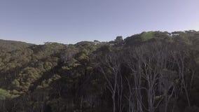 Luftgesamtlänge des Eukalyptuswaldes in Australien stock footage