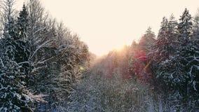 Luftgesamtlänge des Fliegens zwischen schönen schneebedeckten Bäumen mitten in Wildnis in Lappland Finnland stock video
