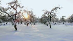 Luftgesamtlänge des Fliegens zwischen schönen schneebedeckten Bäumen mitten in Wildnis in Lappland Finnland stock video footage