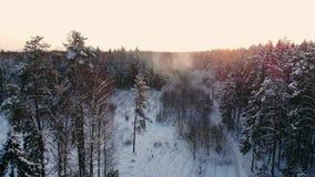 Luftgesamtlänge des Fliegens zwischen schönen schneebedeckten Bäumen mitten in Wildnis in Lappland Finnland stock footage