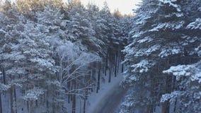 Luftgesamtlänge des Kiefernwaldes im Winter stock video
