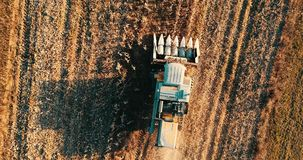 Luftgesamtlänge des Landwirts, der Mähdrescher verwendet und die Felder bearbeitet stock footage