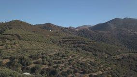 Luftgesamtlänge eines Olivenhains auf den Hügeln bei Sonnenuntergang stock video footage