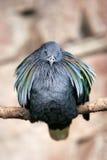 Luftgestoßener Vogel auf Stange Lizenzfreies Stockfoto