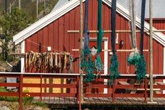 Luftgetrockneter Kabeljaustockfisch lizenzfreie stockbilder