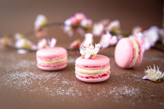 Luftigt och läckert artistiskt rosa och vanilj Macarons med knoppar av rosor Fotografering för Bildbyråer