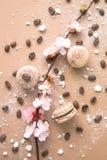 Luftigt och läckert chokladkaffe och borggårdar Macarons Royaltyfri Fotografi