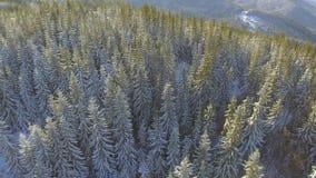 Luftschnee bedeckte Bäume Landschaftswinter-Natur Forest Travel White Tourism stock video footage