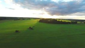 Luftschuß über üppigen Grünfeldern und -wiesen Sonnenuntergang stock footage