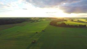 Luftschuß über üppigen Grünfeldern und -wiesen Sonnenuntergang stock video
