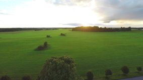 Luftschuß über üppigen Grünfeldern und -wiesen Sonnenuntergang stock video footage