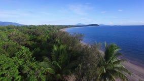 Luftschuß über den tropischen Bäumen stock video