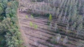 Luftschuß der Grenze eines Waldes und der Pappelplantage stock footage