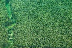 Luftschuß der großen Insel - Eukalyptusregenwald Stockfotos