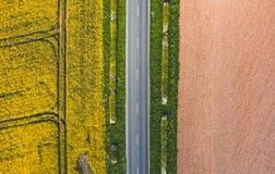 Luftschuß der schmalen Straße zwischen sonnigem grünem Gras, Rapssamen stockfotos
