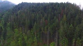 Luftschuß des gezierten Waldes in den Bergen stock video footage