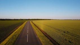 Luftschuß Fliegen Sie über leere Landstraße am Sommerabend zwischen Gelb und Grünfelder stock video footage