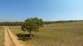 Luftschuß um den Baum auf dem Gebiet stock footage