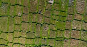 Luftschuß von Balinesereisterrassen stockfotos