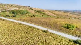 Luftschuß von den Sonnenblumenfeldern bereit zur Ernte Stockfoto