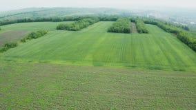 Luftschuß von grünen Feldern im Sommerlicht stock video footage