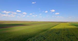 Luftschuß von landwirtschaftlichen Paketen von verschiedenen Ernten stock video footage