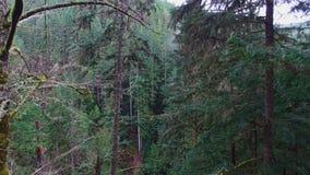 Luftschussgebirgswälder stock video