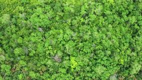 Luftsteigen gesamtlänge des dichten Waldes stock video footage
