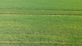 Luftvermessung des Feldes mit gr?nen Trieb Feld des Winterweizens vom Luftbildfotografie landwirtschaft Kornernten stock video