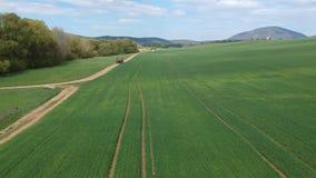 Luftvermessung des Feldes mit gr?nen Trieb Feld des Winterweizens vom Luftbildfotografie landwirtschaft Kornernten stock footage