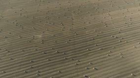 Luftvermessung von landwirtschaftlichen Feldern w?hrend der Herbsternte stock video