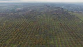 Luftvideo von Herbstgartenfeldern stock footage