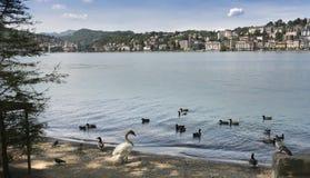 Lugano - lago Lugano, Lugano, Ticino, Suíça, Europa Imagens de Stock Royalty Free