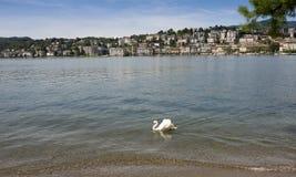 Lugano - lago Lugano, Lugano, Ticino, Suíça, Europa Imagens de Stock