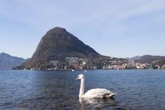 Lugano, neuer Schwan Lizenzfreie Stockbilder