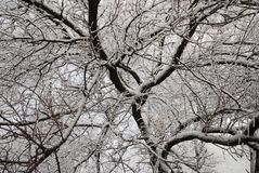 Winter trees in Lugansk stock photo