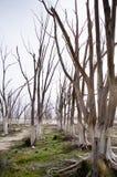 Lugar abandonado em Buenos Aires Fotografia de Stock Royalty Free